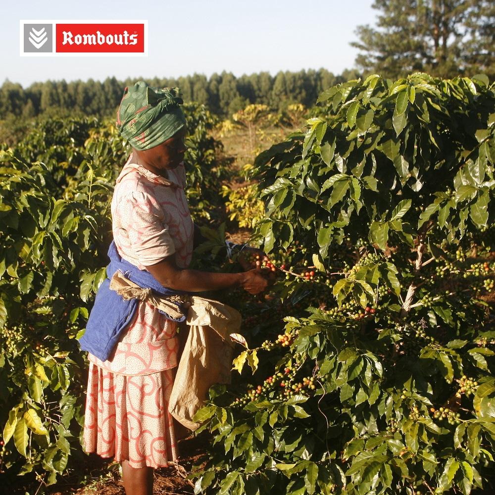 Rombouts duurzaam koffiebonen wassen